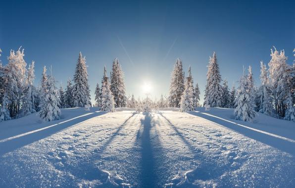 Картинка зима, поле, лес, солнце, лучи, снег, пейзаж, отражение, красота, ели, мороз, простор, сугробы, тени, ёлки, ...