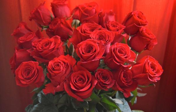 Картинка листья, розы, букет, красные, бутоны, крупным планом