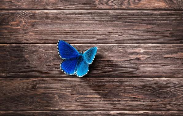 Картинка дерево, бабочка, минимализм, деревянные обои