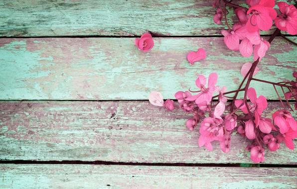 Картинка цветы, весна, розовые, vintage, wood, pink, flowers, spring