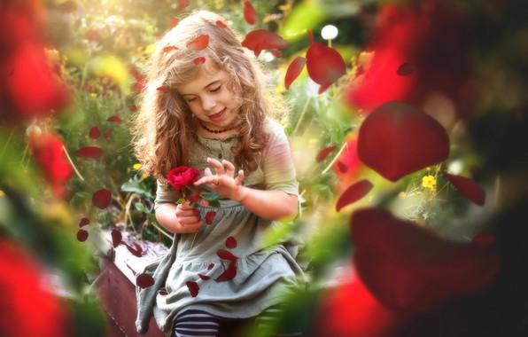 Картинка цветок, лето, природа, роза, лепестки, девочка, ребёнок