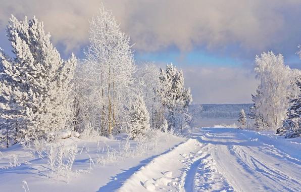 Картинка зима, иней, дорога, снег, природа, мороз