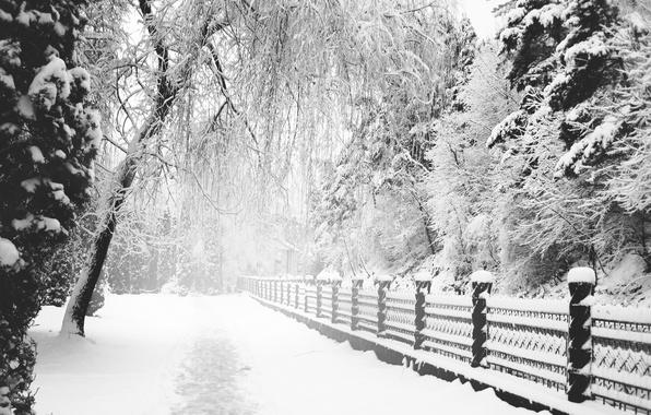 Картинка Зима, Снег, Тропа, Парк, монохром, Winter, Park, Snow, Path