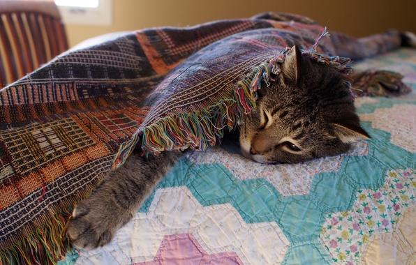 Картинка кошка, кот, морда, серый, комната, отдых, лапа, кровать, покрывало, постель, лежит, одеяло, спальня, засыпает, устал ...