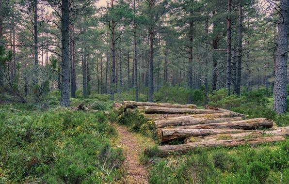 Картинка Деревья, Лес, Брёвна