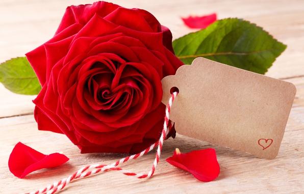 Картинка розы, red, love, бутоны, heart, flowers, romantic, roses, красные розы, valentine`s day