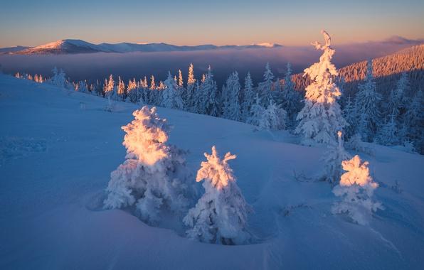 Картинка зима, лес, небо, свет, снег, пейзаж, закат, горы, холмы, красота, сказка, вечер, ели, склон, освещение, …