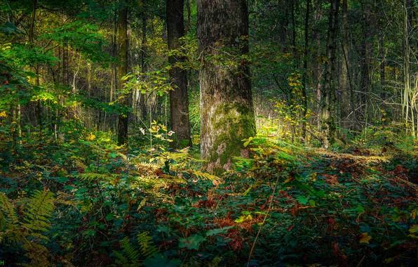 Картинка зелень, лес, свет, дерево