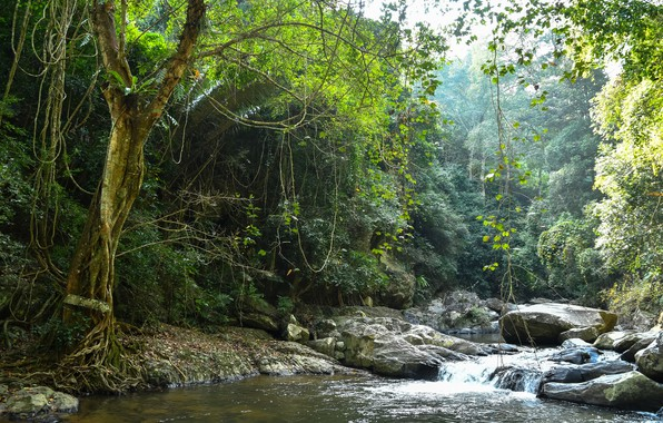 Картинка зелень, лес, деревья, ветки, тропики, ручей, камни, листва, джунгли, Таиланд, Pala-U Waterfall