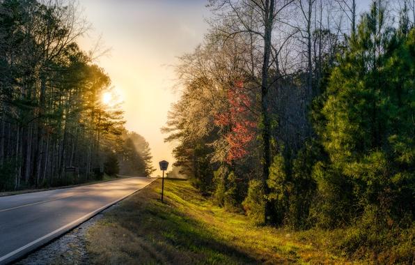 Фото обои дорога, лес, природа, утро