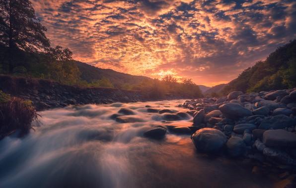 Картинка лес, вода, солнце, река