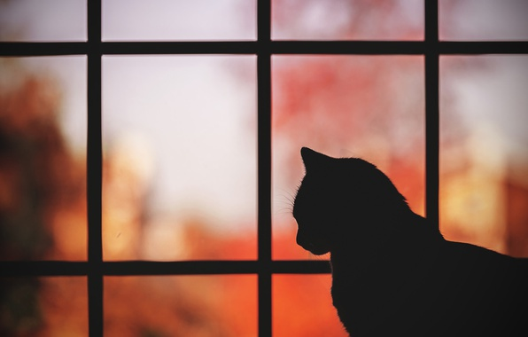 Картинка кошка, кот, фон, силуэт, профиль