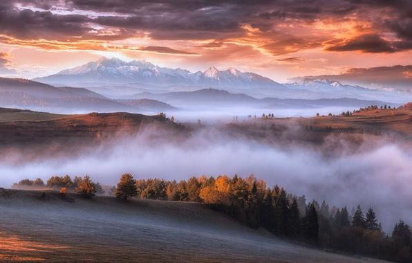 Фото обои горы, осень, Карпаты, утро, туман