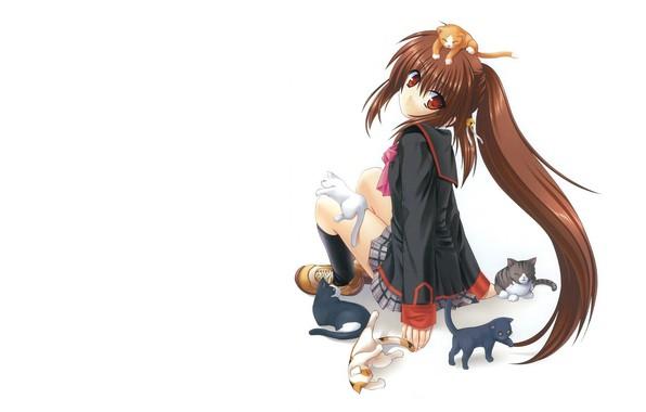 Картинка котята, белый фон, школьница, длинные волосы, кроссовки, играются, сидит спиной