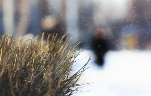 Фото обои зима, снег, фон, куст, картинка, веточки