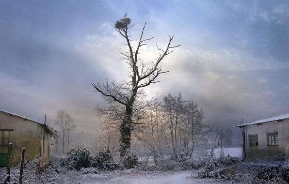 Картинка дерево, птица, двор, гнездо, аист