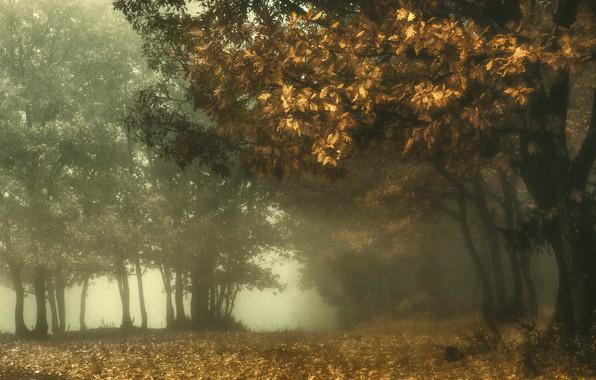 Картинка осень, природа, туман