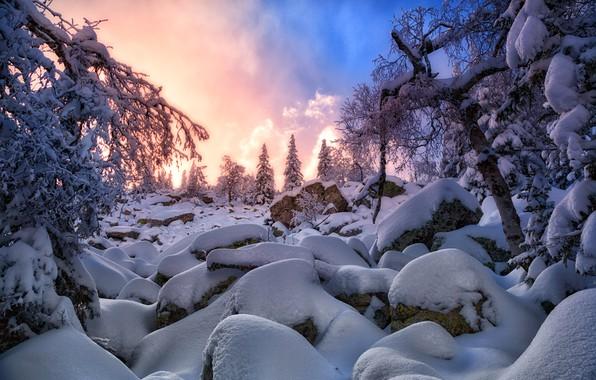 Картинка зима, снег, закат, ель