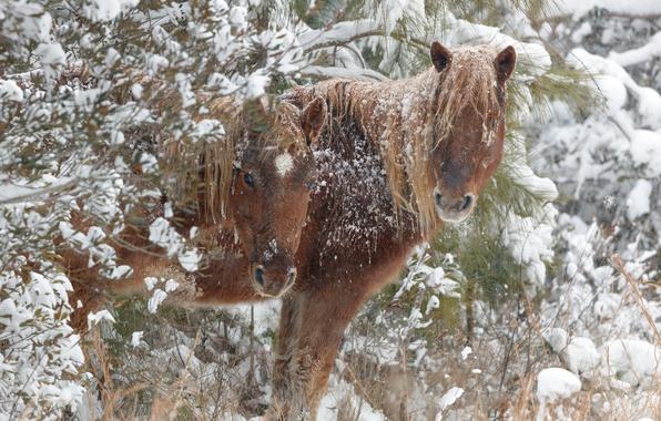 Картинка зима, снег, кони, лошади