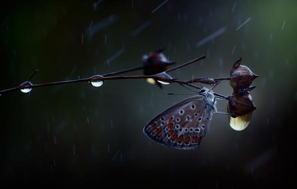 Картинка капли, макро, дождь, бабочка, ветка