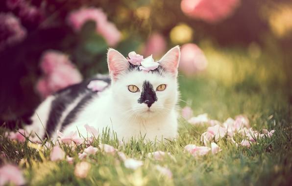 Картинка кошка, взгляд, портрет, лепестки, боке, котейка