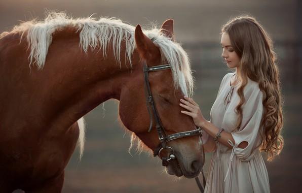 Картинка девушка, лошадь, довольная, гладит