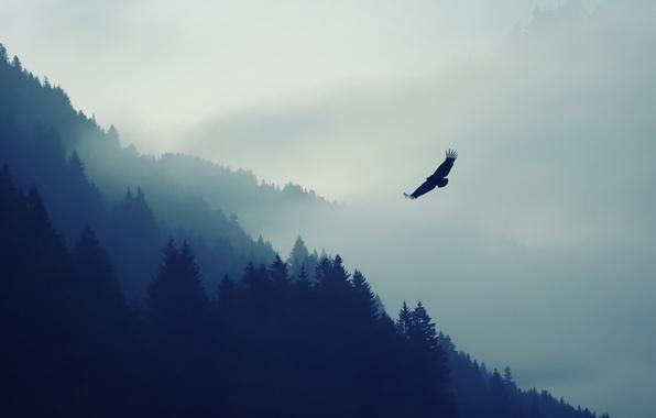 Картинка Природа, Туман, Птица, Деревья, Лес, Животное