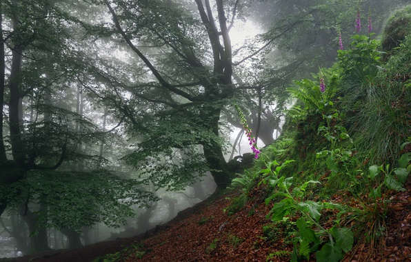 Картинка лес, цветы, туман