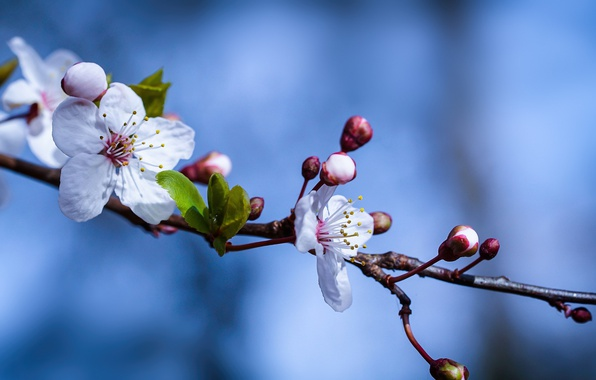 Картинка ветка, весна, цветки