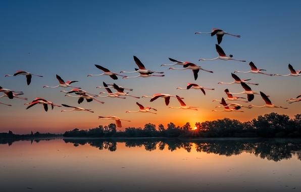 Картинка закат, птицы, природа, озеро, стая, фламинго, перелёт