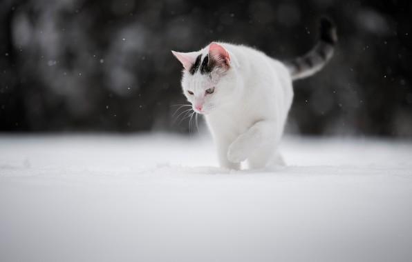 Картинка зима, кошка, снег, котейка