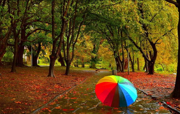 Фото обои Осень, Дождь, Зонтик, Парк, Fall, Листва, Park, Autumn, Rain, Umbrella, Colors, Leaves