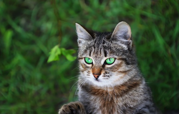 Картинка зелень, кошка, фон, котейка