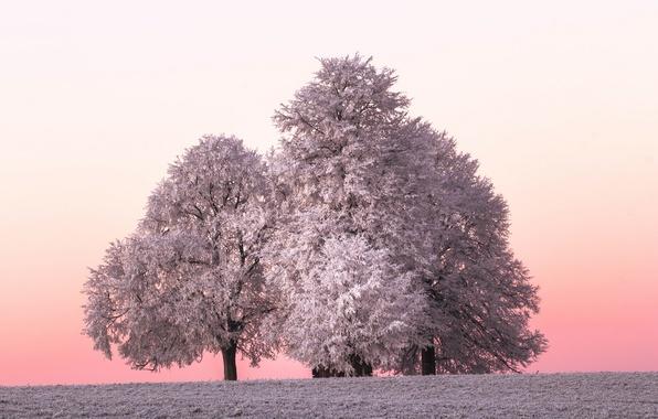 Картинка зима, иней, дерево