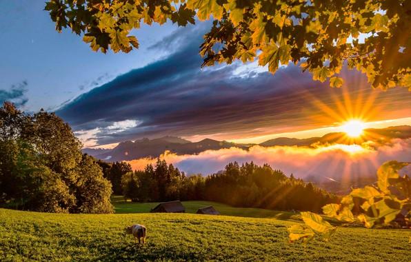 Картинка зелень, лес, небо, трава, листья, солнце, облака, лучи, деревья, горы, корова, луг, домики, веки