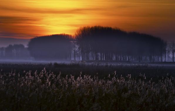 Картинка ночь, природа, туман
