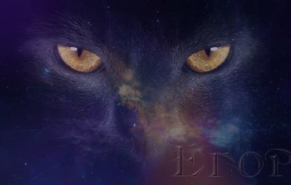 Картинка кошка, взгляд, космоc