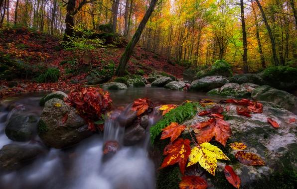 Картинка осень, лес, листья, деревья, пейзаж, природа, ручей, камни