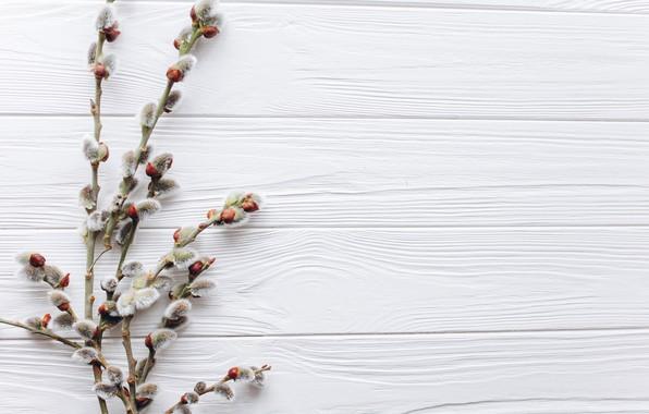 Картинка весна, бутоны, веточки, Верба