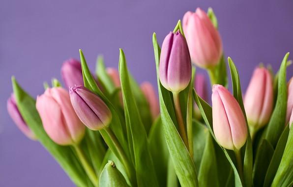 Картинка букет, тюльпаны, nature, blossom, flowers, leaves, tulips, plant, bloom, flora