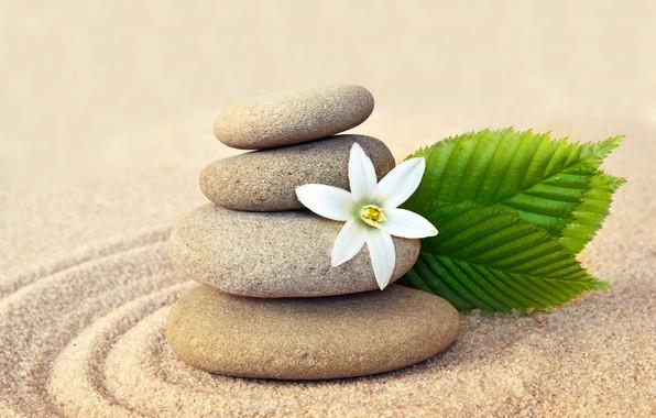 Картинка песок, цветок, камни, flower, sand, спа, stones, spa, zen