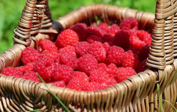Картинка лето, природа, ягоды, малина, корзина, красота, урожай, ягода, витамины, вкусно, дача