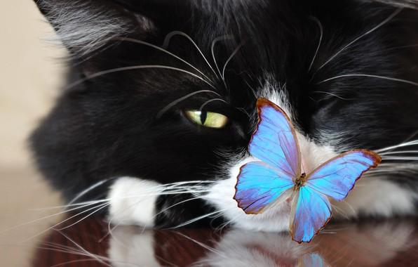 Картинка кот, усы, взгляд, лапы, мордочка, хвост, смотрит, cat, котяра, зеленые глаза, боке, красавчик, хитрюга, wallpaper., …
