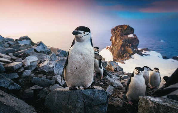 Картинка море, небо, снег, скалы, стая, пингвины