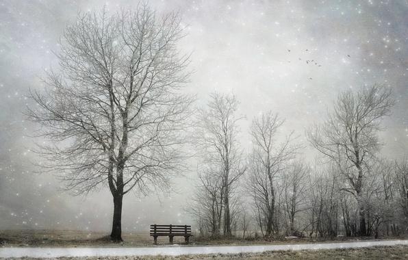 Картинка зима, снег, дерево, скамья