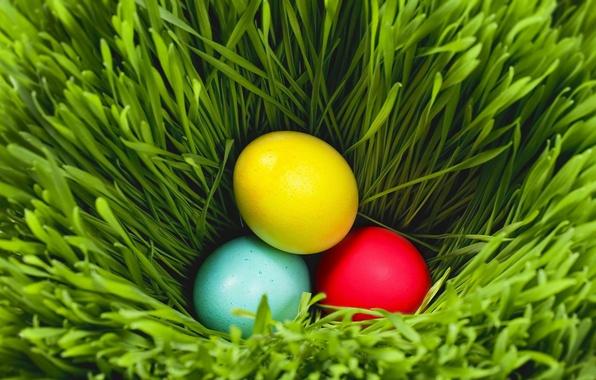Картинка зелень, трава, пасха, яйца крашенные