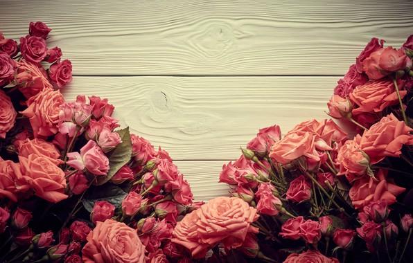 Картинка цветы, розы, розовые, бутоны, wood, pink, flowers, beautiful, romantic, roses