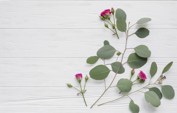 Картинка листья, цветы, розы, розовые, бутоны, wood, pink, flowers, beautiful, roses, bud
