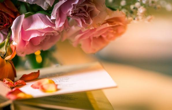 Картинка цветы, стиль, розы, лепестки, книга