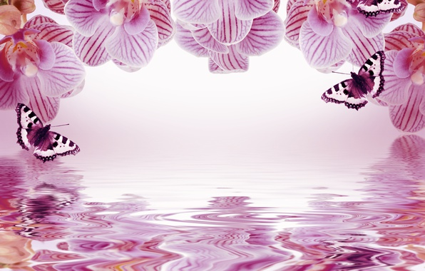 Картинка бабочки, цветы, отражение, фон, рамка, орхидеи